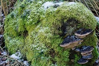 Ein grüner Winterpelz - A green winter fur