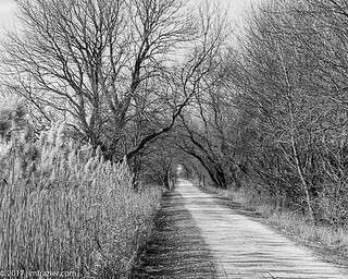 Great Western Trail East of Sycamore, Illinois