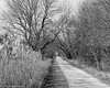 Great Western Trail East of Sycamore, Illinois (Jim Frazier) Tags: q3 2017 20171219rochelleroadtrip phragmites autumn december fall il illinois jimfraziercom natural nature path plants sycamore trails winter bw blackandwhite monochrome desaturated paths lanes pathways walkways footpath beatenpath track route passage forest trees woods woodland woodlot hedge undergrowth brush fastpictures f10