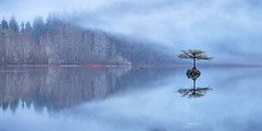 'Wading In' - Fairy Tree, Fairy Lake, Vancouver Island (Gavin Hardcastle - Fototripper) Tags: lake fairy tree winter cold january mist myst reflections mirror port renfrew vancouverisland britishcolumbia freezing gavinhardcastle fototripper
