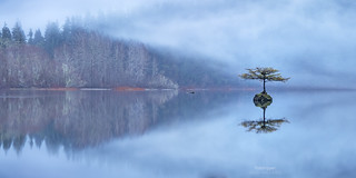'Wading In' - Fairy Tree, Fairy Lake, Vancouver Island