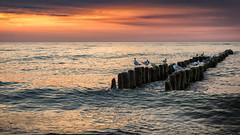 Baltic sunset (utak3r) Tags: europe mielno poland polska sony wakacje2017 a6000 hdr holiday lato morze niebo sea seagulls sky skyporn summer sunset traveling wakacje zachódsłońca pl dramaticsky moodysky twilight seascape horizon