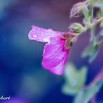 Secret of Nature thumbnail