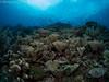 21022018-_1240154 (chevalbenjamin) Tags: philippines visayas bohol underwaterphotography underwater scubadiving dive plongéesousmarine plongée seaocean nature reef recif