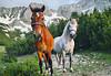 Mountain horses (gabril.avramov) Tags: snow horse mountain horses free bulgaria pirin sinanitsa