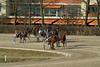 Berlin Trabrennbahn Mariendorf 25.2.2018 (rieblinga) Tags: berlin tempelhof mariendorf trabrennbahn sport pferde wetten rennen 2522018