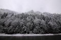 zima Pieniny drzewa 3