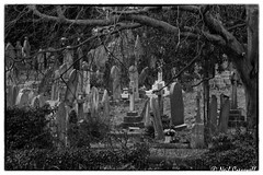 64/365 2018 The Hidden Graveyard (crezzy1976) Tags: nikon d3300 nikkor55300mm blackandwhite monochrome photoborder photoaday outdoors landscape 365 365challenge2018 day64