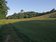Field next to Teign Gorge, very early morning (Philip_Goddard) Tags: europe unitedkingdom britain british britishisles greatbritain uk england southwestengland devon dartmoornationalpark drewsteignton teignvalley teigngorge earlymorning field