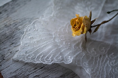 Awaiting (Captured Heart) Tags: rose yellowrose fadedrose lace