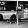 Me too (Blues Walk) Tags: bw monochrome japan osaka olympusep5 leicadgsummilux25f14 street