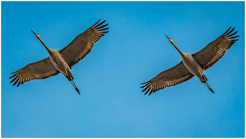 Synchronized Cranes by Karl Knapp -   AW Class B Print - January 2018