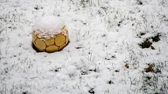 der vergessene Ball (p.schmal) Tags: olympuspenf hamburg farmsenberne neuschnee