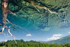 Un lago en el cielo (Martín Manganelli) Tags: lago lake sky cielo camino 7 seven lagos lakes siete reflection tree arbol reflejo cerati neuquen argentina latinoamerica latinamerica