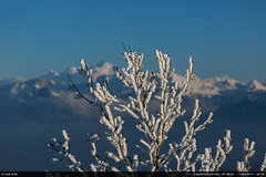 Mont-Blanc (Ludtz) Tags: ludtz canon canoneos5dmkiii 5dmkiii montagne mountain mountains montagnes salève hautesavoie 74 montblanc winter hiver froid cold neige snow white blanc blue bleu frozen gel congères ef135|2l arbres trees glace ice