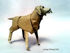 Pudelpointer (Leong, Cheng Chit) Tags: dog origami closeanatomy pudelpointer pointer