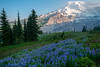Purples (Laura Jacobsen) Tags: hiking mtrainier mtrainiernationalpark mttahoma nationalparks paradise rainier wildfire wildflowers