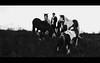 *--- (dagomir.oniwenko1) Tags: horses men male man mono blackandwhite bw boston animals nature lincolnshire life england outdoor uk gb