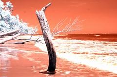 Infrared Cahuita National Park (27) (Beadmanhere) Tags: costa rica cahuita national park infrared