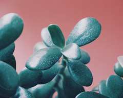 Succulent II (Andrei Grigorev) Tags: succulent plant botanical leaves macro details colors