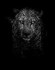 Cyrus, the leopard, in Kruger National Park 😱  gerandeklerk https://t.co/sd0Mmr7P8p #istanbul #food #lezzet #mutfak #nefis #kebap #Tarif #yemektarifleri #foodporn #recipe #cooking #recipes #foodie #cook #delicious #healthy #health #yummy (farosgroup) Tags: faros istanbul turkey hotel restaurant meal breakfast lunch food foodie instafood yummy yum foodgasm nomnom recipe delicious dinner