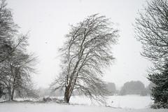 Bending In The Snow