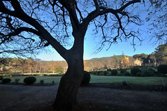 Cold Morning | Port Arthur, Tasmania (Ping Timeout) Tags: tasmania tassie state australia vacation holiday june 2017 island south commonwealth oz bass strait hobart tas port arthur tree green outdoor blue sky skies scene scenery beautiful winter morning leaves leaf bush grass field lawn landscape park road path penal settlement historic site convict colony ruin unesco world heritage 1024 wide angle