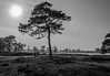 Appelscha Dunes (stefanfortuin) Tags: dunes duinen nederland netherlands appelscha sand zand natuur nature landschap landscape big huge tree forest water meer plas bomen boom trees black white grass canon 500d