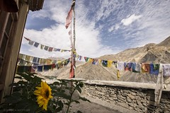 LADAKH 2017    _DSC2412 (. meg_monica .) Tags: ladakh india ladakh2017 travel buddha monastery monk nikond610 monicamietitore flags prayers