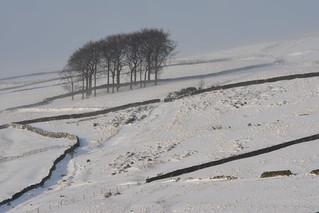 Twenty Trees on the Snake Path, Peak District National Park, Derbyshire, England.