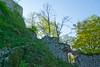Mury wewnętrzne dziedzińca zamkowego 83 (Hejma (+/- 5400 faves and 1,7 milion views)) Tags: mury wewnętrzne fragment wieży okno drzewa liście zielone