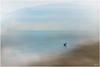 The Heron (mad_ruth) Tags: art seascape textures jaijohnson lesvos sea kalloni heron blue brown greece