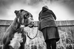 It is not the leash that holds him there but his genuine love... (Mustafa Selcuk) Tags: parismaville parichien parichienne parisien monochromatic monochrome streetphotography streetphotographer street 16mm wideangle xt2 fujifilmtr fujifilmfrance noiretblanc bw bnw blackandwhite siyahbeyaz amourdechien doglovers doglove perro cachorro hund kopek chien dog dogs 2018 paris france fujifilm