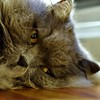 Chat fatigue beaucoup ! (Marycailloux) Tags: fatigue