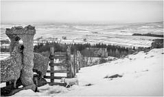 Holwick . (wayman2011) Tags: f2 fujifilmxf35mm lightroomfujifilmxpro1 wayman2011 bwlandscapes mono rural gates dogs doris jackrussels houses winter snow pennines dales teesdale holwick countydurham uk