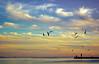 scenery of the Caucasus (Marika Hexe) Tags: caucasus scenery landscape nature 자연 풍경 남 south φύση τοπίο νότια ბუნების პეიზაჟი სამხრეთ բնություն լանդշաֆտ հարավ sunset sun glow red sea մայրամուտ արեւ зарево կարմիր ծով залез на слънце светят червено море ηλιοβασίλεμα ο ήλιοσ πυράκτωση κόκκινη θάλασσα მზის ჩასვლა ზღვის la puesta de sol el resplandor rojo mar русский закат солнце красный 10000 латышский перевести вgooglebing saulrieta saules svelme sarkano jūru sonnenuntergang sonne glühen rot meer