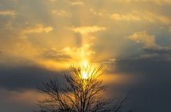 Heavenly Tree (Jeff Saly) Tags: heavenly sunset yellow clouds