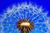 beautiful (woailvyou1234567) Tags: beautiful waterfall love like praisegod glorytogod sky snow flower