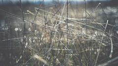 PB_012618_38 (losing.today) Tags: brianyoung oregon pacificnorthwest portland pdx portlandoregon portlandor winter nature outdoors naturepark plantlife plants moodyseason darkseason losingtoday grass grassstudies