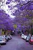 Sydney 2018 (MIP102) Tags: sydney australia city citylife lifestyle life sky blue building cityscape capture canon photography houses road street tree jacaranda