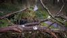 """""""Route des Chicanes"""" sur la zad #NDDL: esprits des forêts et des bocages... +infos=clic> (ValK.) Tags: nddl zad d281 notredamedeslandes politique valk vinci aeroport lutte resistance routedeschicanes social zoneadefendre"""