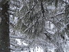 2018-01-22_19-25-15 (dubok_andrew) Tags: kuluarpohod карпаты zakarpattia