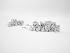 The mountain birch grove (Fjällkantsbon) Tags: doroteakommun sverige vinter midvinter lappland borgafjäll januari evamårtensson västerbottenslän se mountain mountainbirch fjällbjörk fjäll lapland minimalistic minimalism mono bw birch