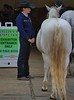 Nice Tail (Scott 97006) Tags: horse tail white woman female lady rear