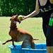 Austin Husky Meetup at Georgetown Dog Park