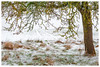 Campagne sous la neige (Pascale_seg) Tags: lanscape paysage country countryside campagne field champ neige snow winter hiver blanc white tree cadre frame branches moselle lorraine france nikon sky herbes
