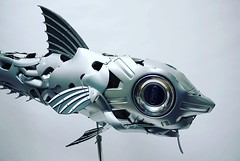 I've got my eye on you! Rat tailed Grenadier #deep #deepseafishing #underwater #fish #recycled #upcycled #hubcapcreatures (ptolemye) Tags: deep deepseafishing underwater fish recycled upcycled hubcapcreatures