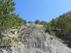 DSCN9570 (Gianluigi Roda / Photographer) Tags: apennines latesummer summer 2012 mountains geologicalevidences geologicaloutcrops rocks trees landscapes appenninobolognese crocedeicolli