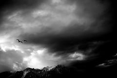Puissent les airs être aussi doux que les plumes... (Sabine-Barras) Tags: suisse switzerland monochrome blackandwhite bnw bw dark sky ciel clouds nuages montagnes mountain bird oiseau paysage