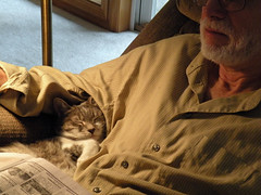 Daddy and Daughter (PDX Bailey) Tags: cat pet lap light available daddy daughter shirt beard sleepy sleep people man paper newspaper indoors photography button buttons stripes jack